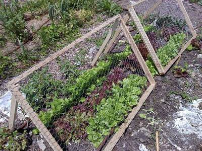 Awesome A Lower Height A Frame Trellis Is Placed Here On The Exterior Of Vegetables.