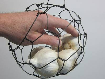 A hand is trying to take a bulb of garlic out from the round chicken wire mesh basket.