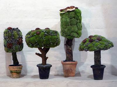 Four flowerpots are placed in order with plants inside well shaped.