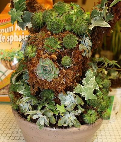 A pot of rabbit shaped plants is placed on table.