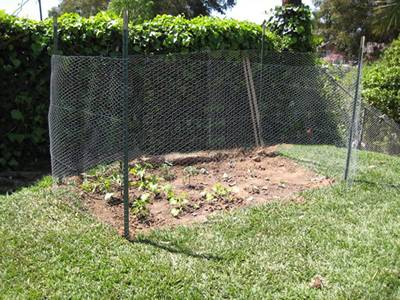 Chicken wire is fastened onto the U post to protect the plants in the garden.