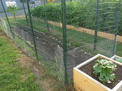 CWGF 6: Chicken Wire For Garden Netting
