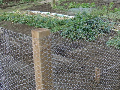 CWGF 9: Chicken Wire For Garden Netting