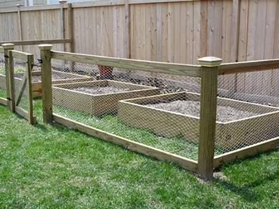 Chicken Wire Mesh Used in Garden as Fence, Raised - CFGuide Forum