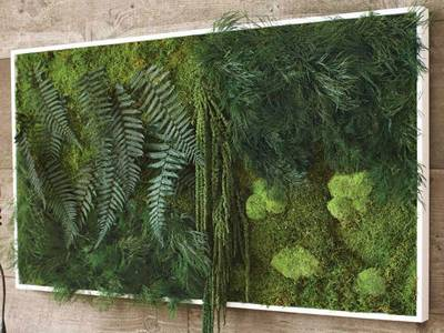 Ferns are placed inside the frame indoor.