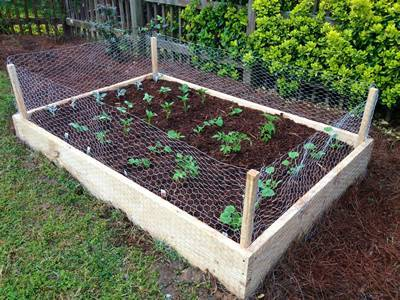 Chicken Wire Makes Itself A Perimeter Fence For A Plant Bed.