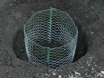 A higher green and lower white gopher basket is placed in a large hole.