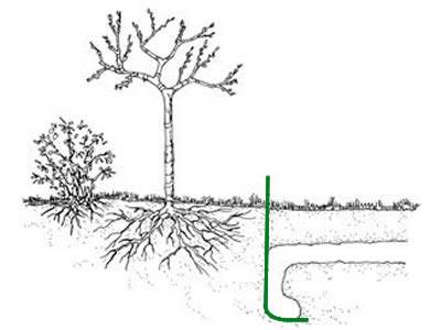 A big tree and a small shrub is protected by gopher wire mesh shaped 'L'.