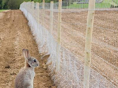 A rabbit is blocked on the outside of rabbit fencing, can not enter