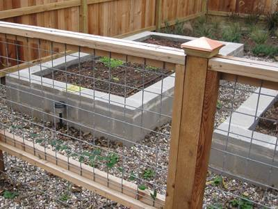 Welded wire mesh is used as garden fence to protect vegetables.