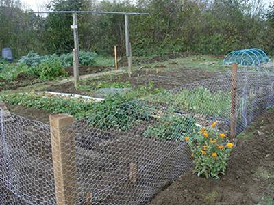 En Wire Mesh With Vegetables Inside And Flowers Outside