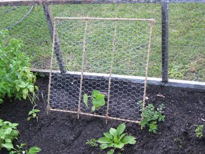 A Plant Is Protected By En Wire Mesh Made Leaning Trellis Among Plants
