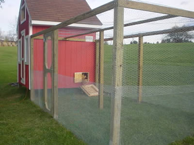 Installation Chicken Wire Or Poultry Netting