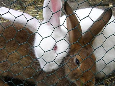 Rabbit Netting